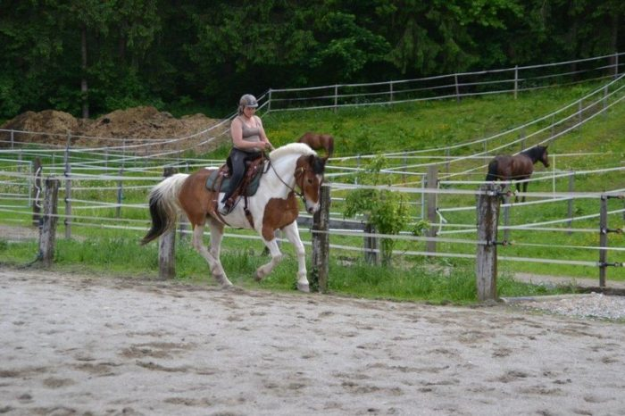 Natural-Horsemanship-horse-around,gerda-beer,pferdetraining