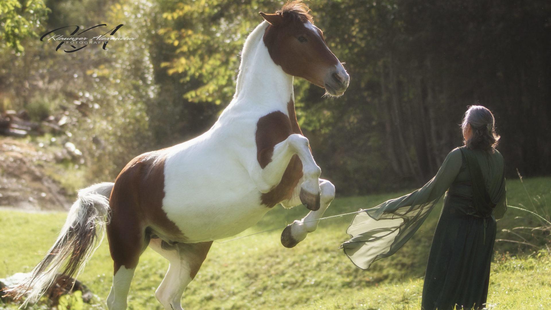 horse-around