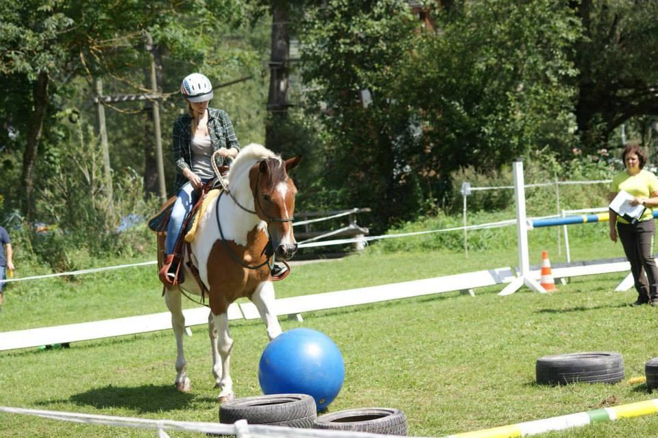 Natural-Horsemanship-horse-around,gerda-beer,pferdetraining, reitunterricht, reitpädagogik, kinderreiten, pferdeveranstaltung, turnier, horse-games, harmonic-horsegames, horsegames,pferdespiele,spiel-und-spaß-mit-dem-pferd