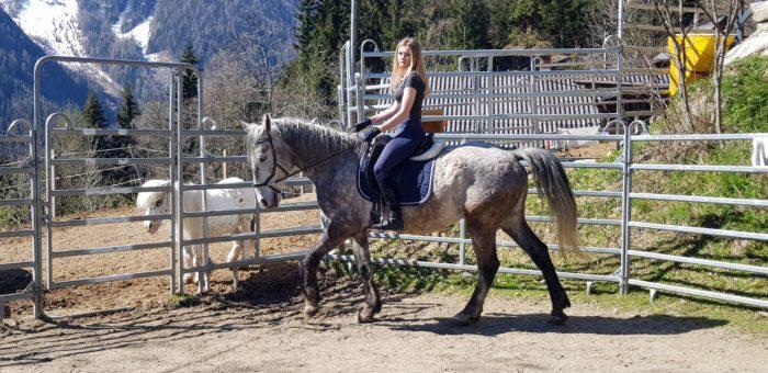 Natural-Horsemanship-horse-around,gerda-beer,pferdetraining, kinderreitunterricht, reitpädgogik, reitunterricht, mobiler trainer,reitlehrer